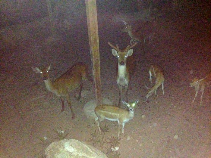 Terra Natura Zoo in Benidorm