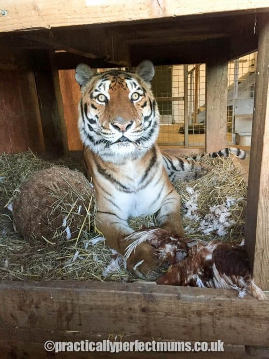 Focus on Noah's Ark: Biggest Zoo in the South West