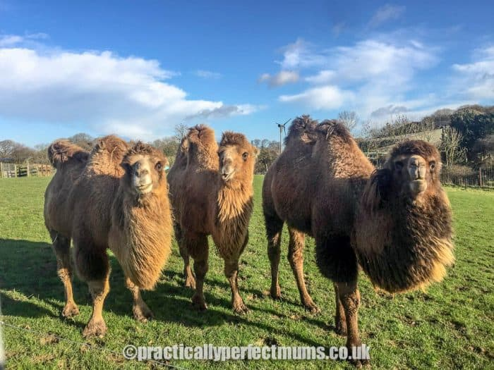 Focus on Noah's Ark Zoo: Biggest Zoo in the South West