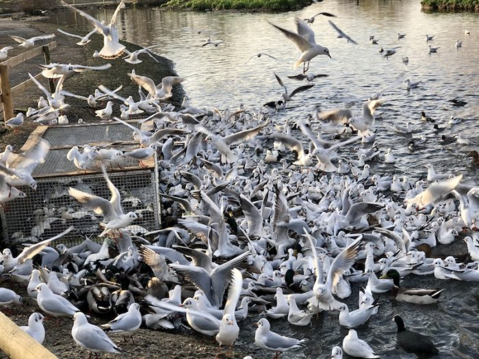 Slimbridge Wetlands Trust